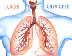 animated Human Lungs - pulmonary system 3D model