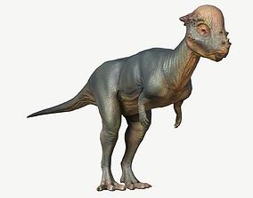 3D model realtime Pachycephalosaurus