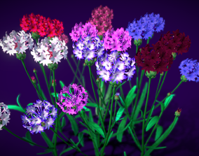 Flower Centaurea 3D model