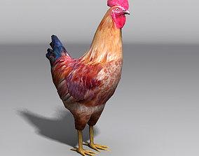 3D asset rooster