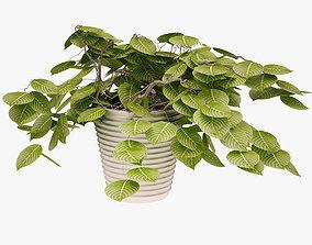 Plant 03 ivy 3D