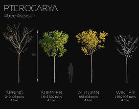 3D model 16 Tree Pterocarya 4 season