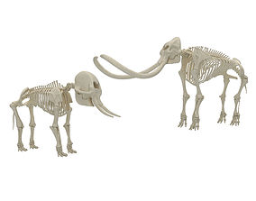 antler Mammoth and Elephant Skeletons 3D model