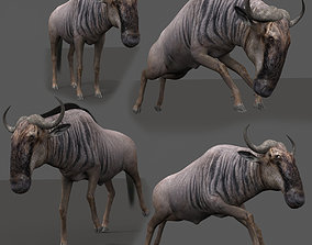 3D model animated Wildebeest PRO