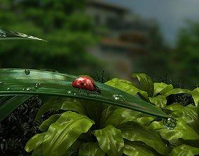 ladybug Ladybug in the forest 3D asset