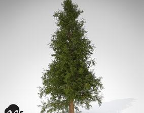 XfrogPlants Western Red Cedar 3D model