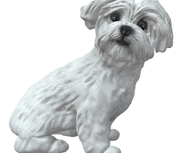 3D model No221 - White Dog