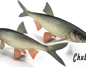 3D model Chub fish