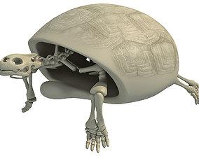 3D skeleton Turtle Skeleton with Cutaway Shell