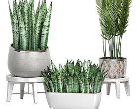 Potted plants Set 47 nature 3D
