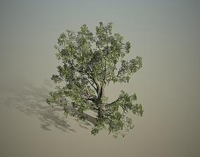 Broadleaf - Hero field 3D model