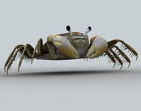 Crab Scopimera globosa 3D asset