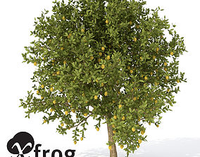 3D XfrogPlants Lemon