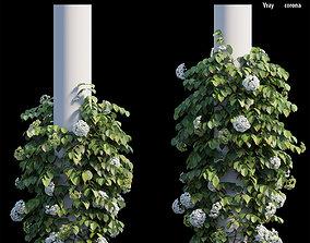 3D Climbing Hydrangea