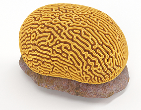Brain Coral and Sea Stone - PBR Set 3D