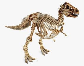 Dinosaur Skeleton 3D