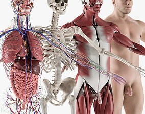 Male Complete Anatomy 3D