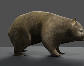 animated 3D animated Common Wombat
