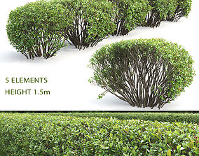 3D Cotoneaster lucidus hedge 02