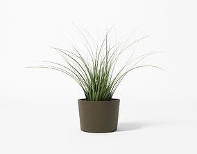 3D model Bush - Pot - Plant