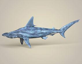 3D model Realistic Hammerhead Shark