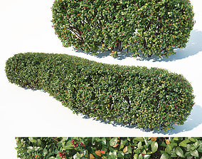 3D model Cotoneaster lucidus Nr1 customizable hedge