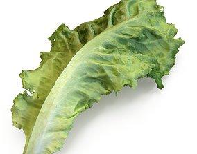 3D model Green leave salad
