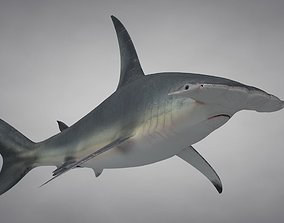 3D asset Great Hammerhead Shark Rigged C4D