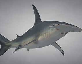Great Hammerhead Shark Rigged C4D 3D model animated