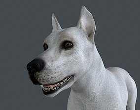3D model MDOG-001 Animated Male Dog