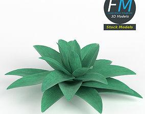 Stylized succulent plant 3D