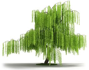 Green Willow Tree 3D