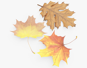 Autum Leaves 3D model