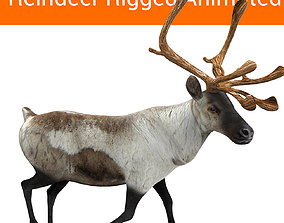 Snow Reindeer Animated Rigged Model 3D animated