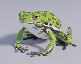 3D model realtime Barking Tree Frog - Animated