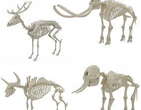 3D model Animal Skeleton Collection
