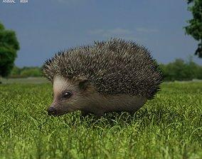 Hedgehog Erinaceinae 3D model