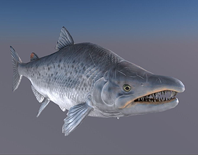 Salmon Model With A Rig 3D