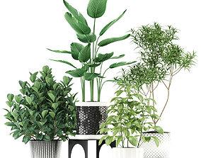 3D Plants collection 118