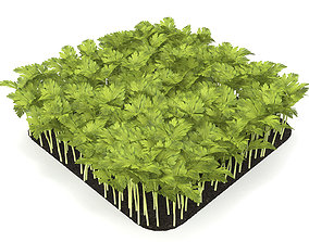 3D Celery rect