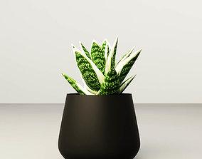 Aloe vera potted 3D flower-pot