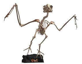 3D model Owl Skeleton Cute