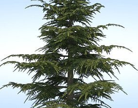 bark Pine Tree 3D