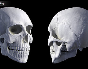 3D printable model Hq Human skull