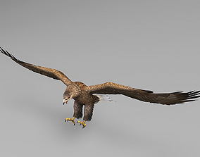 Eagle Rigged Animated 02 3D asset