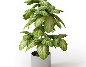 3D Broad Leaf Potted Plant