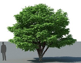 XfrogPlants Jabuticaba - Myciaria Calufifloria 3D model