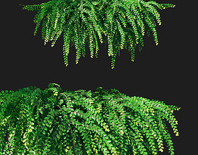 Phyllanthus Cochinchinensis Leaf flower creeper 3D model