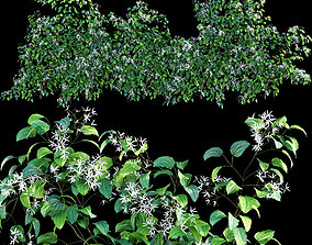 Creeper - Clematis Glycinoides 02 3D model