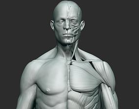 3D Anatomy sculpt